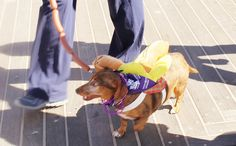 1000+ images about Alzheimer39;s  PETS on Pinterest  Alzheimers, Pets