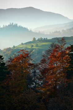 ✯ Autumn in Alsace, France