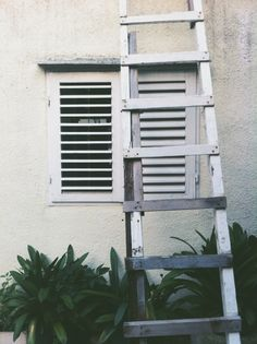 Croatia, Makarska #croatia #makarska #window #wall #leadder #plants