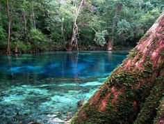 Cypress Springs Adventures | Your guide to a Holmes Creek treasure