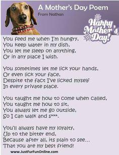 Doggie mommy
