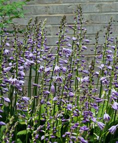 9 Stunning Perennials You Need For Your Shade Garden | The Green Dirt