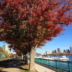 #fall #Boston #cambma #cambridgema #charlesriver #tree by aretefyre October 23 2015 at 02:36PM