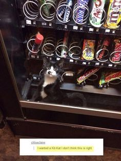I'M DYINGGGGGGGGGG Vending machine kitten. | 23 Of The Cutest Things That Have Ever Happened On Tumblr