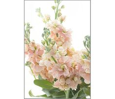 Floral Photography Pastel Art Pink Flower Photo by JudyStalus