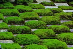 #Japanesegarden #日本庭園 #Worldheritage #世界遺産 #Ancientcity #古都 #Kyoto-shi #京都市 #Kyoto #京都 #Tofuku-jiTemple #東福寺 #Tofukuji #Moss