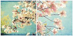 Think Spring ! | Flickr - Photo Sharing!