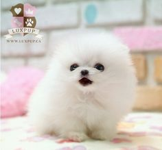 I want this puppy #fluffy