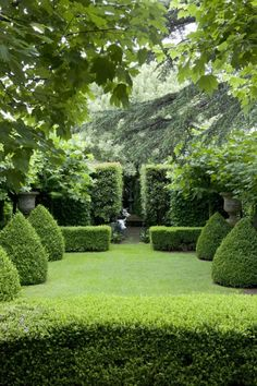 topiary, lawn, hedges, evergreen, enfilade, axis, backyard