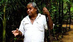 - Dream Time Legend Walk - Learn about the spirituality and traditions of the Kuku Yalanji people. Rainforests, Spirituality, People, Tropical Rain Forest, Spiritual, People Illustration, Folk