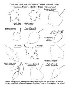 Tree Identification | Leaf Shapes - Deciduous Tree Identification -- Exploring Nature ...