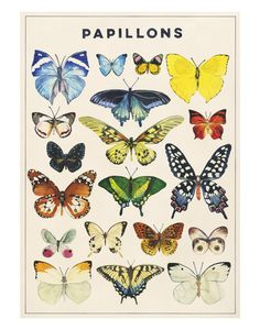 Papillons by Marcel George for @buddyeditions #art #prints #butterfly