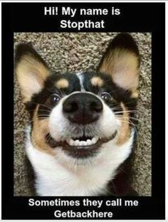 Stopthat funny cute memes animals dog puppy meme lol funny quotes humor funny animals