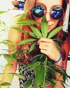 How to grow marijuana and weed to produce quality buds. We show you how to be successful when you are planting pot! http://plantingpot.com/