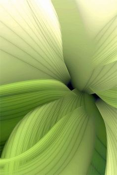 Honeydew Green Macro