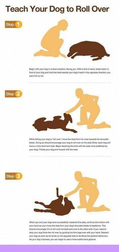 Dog Obedience Training: Hand signals for dogs and dog mom – Sam ma Dog Training Puppy Training Tips, Training Your Dog, Potty Training, Training Collar, Training Classes, Crate Training, Agility Training, Training Academy, Training Schedule