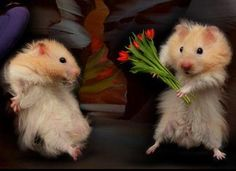 Just a short get to know me... - mice valentine flowers