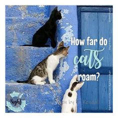 How far do you think your cat roams during one day? I explain their patterns and distance traveled here. Outdoor Cats, Cat Walk, Beautiful Day, Distance, Africa, Patterns, Animals, Fictional Characters, Cats