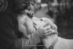 © Photo Lab Pet Photography  | Lappies at Sonoma Humane Society