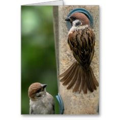 Raintree Earth Design: Delightful Tree Sparrows On Feeder and Note Card
