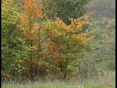 Four Seasons - Autumn - Vivaldi tekenen op muziek