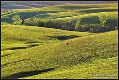 Kansas prairie in May