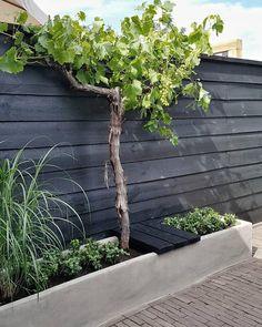 Back Gardens, Small Gardens, Outdoor Gardens, Dream Garden, Home And Garden, Growing Gardens, Backyard Pool Designs, Home Landscaping, Garden Fencing