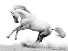 White Horse Jesus Coming On - Bing images Bing Images, Horses, Ink, Animals, Easy, Animales, Animaux, Animal, India Ink