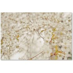 Trademark Fine Art 'White Cherry Blossoms' Canvas Art by Ariane Moshayedi, Size: 12 x 19, Multicolor