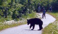 Anchorage Bike Trails