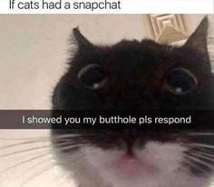 32 Cat Memes To Guarantee You Have A Fabulous And Paw-sitive Caturday! - World's largest collection of cat memes and other animals Funny Animal Memes, Cute Funny Animals, Funny Animal Pictures, Funny Cute, Cute Cats, Hilarious, Memes Humor, Cat Memes, Funny Memes