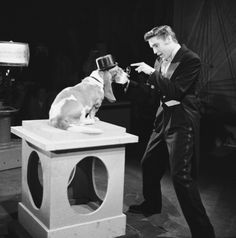 Elvis on the Steve Allen Show Elvis regretted this scene singing in a tux to a hound dog. Steve Allen stated that Elvis loved but he did not and Scotty Moore had said so! Elvis Presley Hound Dog, Rock N Roll, Allen Show, Steve Allen, Milton Berle, Young Elvis, Elvis Presley Photos, Drag, Graceland