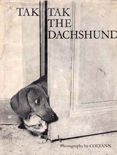 Tak Tak the dachshund with a kitty friend