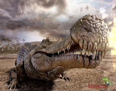d1471a201d933 Sarcosuchus(flesh crocodile emperor) looked and behaved like a modern  crocodile