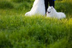 This samoyed accompanied us for almost the whole day, and by the end of it, I wanted one!