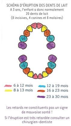 Dents de lait - Les dents de bébé étape par étape - Bioseptyl