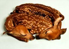 Deer's? Cute? Yes.
