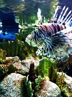 I took this at the Baltimore Aquarium =)