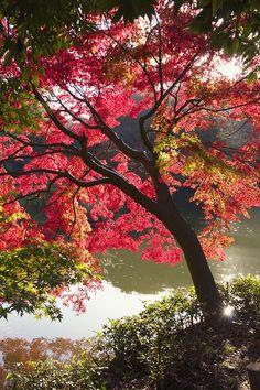 Autumn red | Yakushidai 1 Chome, Machida-shi, Tokyo Prefecture, Japan | by Masanori Kurachi Magic in the Treetops THE PRIME MINISTER, SHRI NARENDRA MODI WITH THE NARI SHAKTI AWARDEES, IN NEW DELHI. PHOTO GALLERY  | PIBCMS.NIC.IN  #EDUCRATSWEB 2020-03-19 pibcms.nic.in https://pibcms.nic.in/WriteReadData/Banner/2020/Mar/T202003093426.JPG