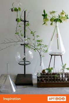 Antique science equipment + plants = cool. #APTCB2 #workswithCB2