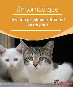 Síntomas que develan problemas de salud en un gato A continuación, te detallamos enfermedades que suelen padecer los gatos y los principales síntomas para identificarlas. Así podrás resolver los problemas de salud en un gato. #salud #enfermedades #gatos #síntomas