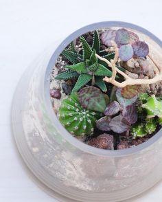 Happy Spring Equinox everyone. #ModernPlantStyle  #theZenSucculent #SpringisHere #terrarium by thezensucculent