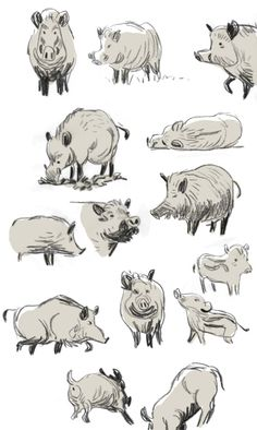 Animal Sketches, Animal Drawings, Cat Pose, Wild Boar, Character Design Animation, Animal Coloring Pages, Life Drawing, Creature Design, Pet Birds