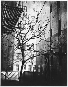 Manhattan Courtyard, 1945. Brett Weston. © The Brett Weston Archive