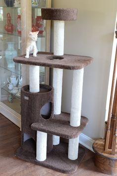 Cats Are Nocturnal Modern Cat Furniture, Pet Furniture, Furniture Dolly, Cheap Furniture, Painted Furniture, Cat Activity Centre, Cat Tree Designs, Diy Cat Tree, Cat Toilet