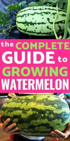 Growing Tomatoes From Seed How to Grow Watermelon in Your Garden: From Seed to Harvest - Nothing beat homegrown watermelon! Learn how to grow watermelon in your vegetable garden, plus how to start from seed and when to harvest. Garden Types, Diy Garden, Fruit Garden, Harvest Garden, Garden Ideas, Flowers Garden, Indoor Flowers, Garden Projects, Watermelon Plant