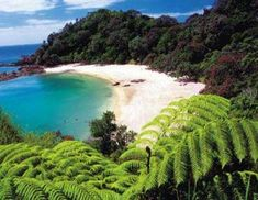 Whale Bay, just round the corner from Matapouri.  I used to walk here & dream about my future...