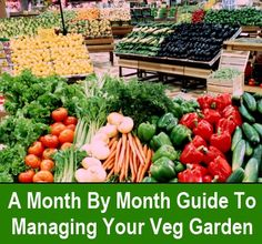 Month By Month Guide To Your Vegetable Garden