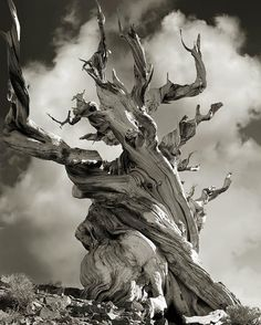 Woman Spends 14 Years Photographing The World's Oldest Trees...Beth Moon