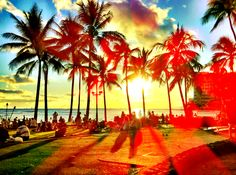 summer and palm trees